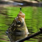 Что нужно взять с собой на рыбалку?