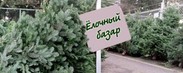 Известны адреса елочных базаров в Набережных Челнах