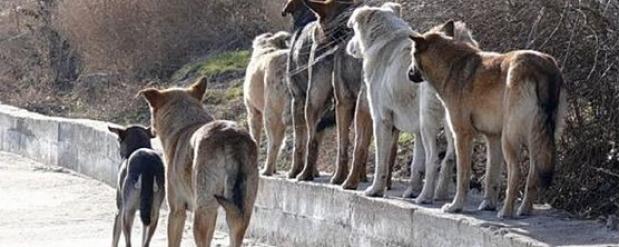 Бездомные псы погрызли труп 18-летнего челнинца