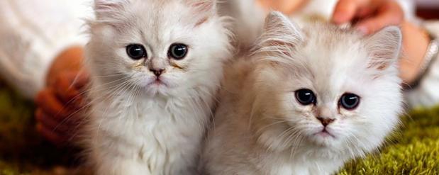 На выставке в Автограде будут раздавать щенков и котят