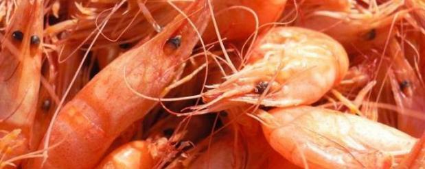 Челнинцы предложили на биогазу с Тогаевской свалки выращивать креветки