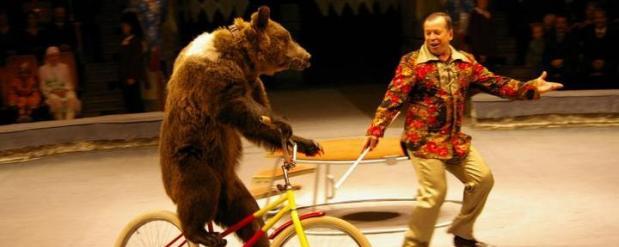 Нового цирка в Набережных Челнах пока не будет