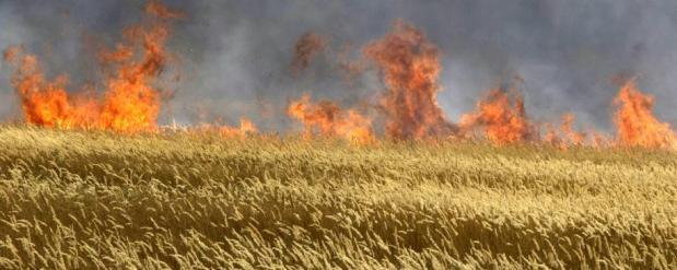 В Набережных Челнах рядом с заводами вспыхнул пожар