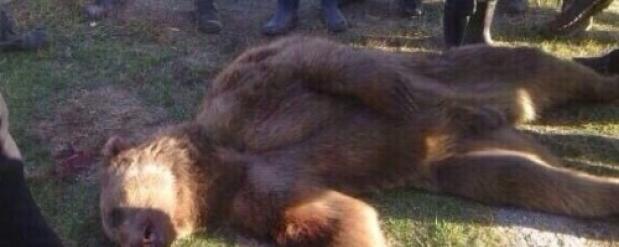 Под Набережными Челнами медведь убил и растерзал тела двух мужчин
