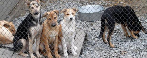 Приют для бездомных животных может появиться в Набережных Челнах