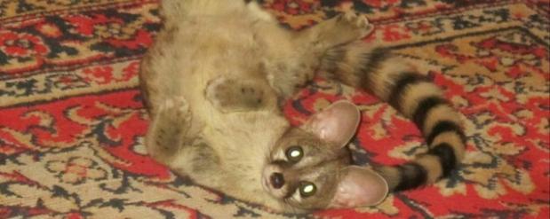 В Челнах на улице найдено экзотическое животное
