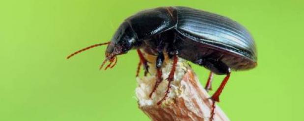 В Набережных Челнах - нашествие жуков