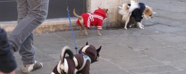 В Набережных Челнах потратят почти полмиллиона на модернизацию площадки для выгула собак
