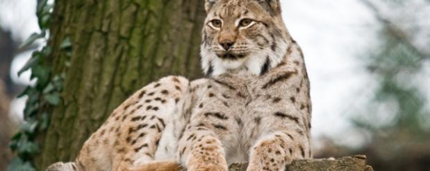 В Челнах скоро откроется зоопарк