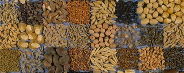 В Челнах мошенник продавал просроченные семена